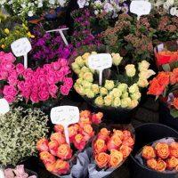 Rob van Egmond Bloemen & Planten